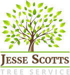 Jesse Scott Tree Services